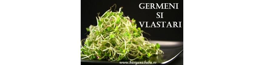 Seminte germinat
