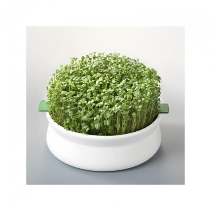 Vas pentru germinare seminte mucilaginoase Germline