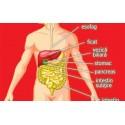Sanatate Organelor - suplimente naturale (tratament)