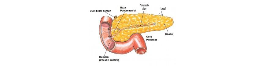 Sanatatea Pancreasului - suplimente naturale