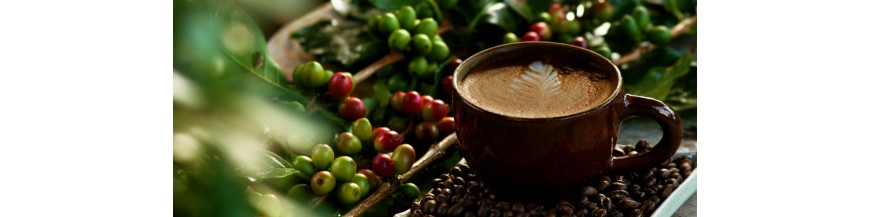 Cafea Espresso BIO Organica
